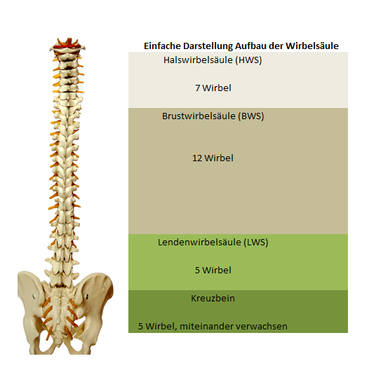 orthopädische matratze